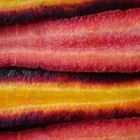 Mark Saunders – Carrots 'Purple Haze' and 'Red Samurai'