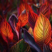 Ceri D Jones - Leaves of Fire