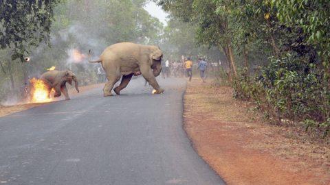 عکس دلخراش بچه فیل آتشین جایزه گرفت