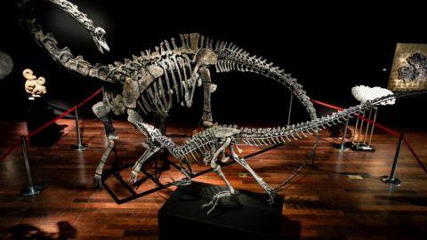 حراج فسیل دو دایناسور بزرگ در پاریس