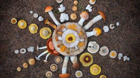 قارچ های جنگلی آلهوپورو؛ رسانه ای رنگین از فنلاند
